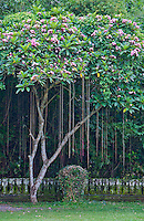 Tropical garden and flowering tree at Pura Taman Ayun near Mengwi in Bali, Indonesia