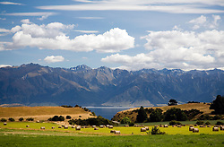 Otago, South Island, New Zealand: Lake Hawea hayfield with mountain backdrop.