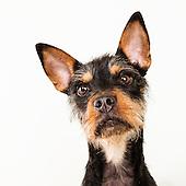 Adoptable Dogs 9-21-16
