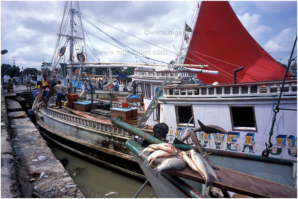 copyright: Nigel Hillier.Brazil,Para,Belem. boats in the harbour, fish in foreground