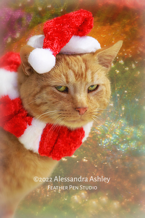 Morris, short-haired orange cat, dressed in his holiday best.  Image produced for Ohio Bird Sanctuary for promotional usage.  Morris, a former stray who was rescued, now works as a greeter at the sanctuary.
