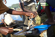Freshly caught Talapia being sold by fishermen, Lake Hawassa, Ethiopia.