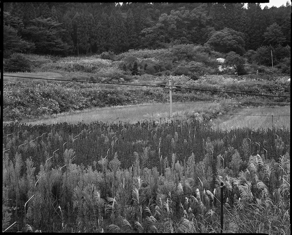 Evacuated Farm Iitate, Fukushima