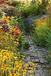 Hot border at Glebe Cottage in autumn. Rudbeckias, sunflowers and asters. Rudbeckia fulgida var. deamii