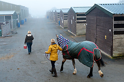 © Licensed to London News Pictures. 27/10/2016. Builth Wells, Powys, Wales, UK. Handlers exercise their cobs on a cold and foggy start to the first day of The Autumn Cob Sale - the largest sale in the World of registered Welsh Cobs Section D, Welsh Ponies of Cob Type Section C and their Part Breds. The sale takes place over three days at The Royal Welsh Showground in Builth Wells, Powys, UK, attracting an audience of thousands of Welsh Cob enthusiasts worldwide. Photo credit: Graham M. Lawrence/LNP