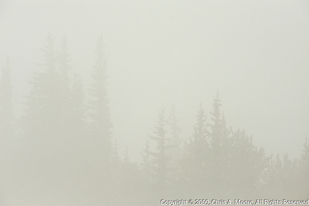 Pines barely show through the fog at Squaw Pass, Colorado.