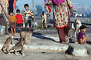 Three siblings (top left) are observing their mother offering a plate of milk to three small cats, (bottom left) while another young girl is defecating (right) in front of their home near the railway tracks in New Arif Nagar, one of the water-affected colonies standing next to the abandoned Union Carbide (now DOW Chemical) industrial complex, site of the infamous 1984 gas tragedy in Bhopal, Madhya Pradesh, central India. The poisonous cloud that enveloped Bhopal left everlasting consequences that today continue to consume people's lives.
