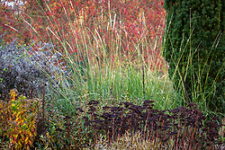 Pennisetum macrourum - African feather grass and sedum seedheads in a late autumn border