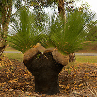Grass Tree Selection