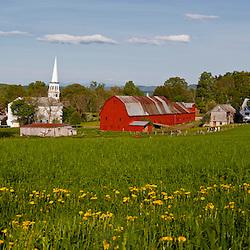 Dandelions, barn, and church in Peacham, Vermont.