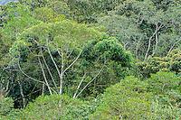 Andean cloud forest;  Bellavista Cloud Forest Lodge & Reserve, Tandayapa Valley, Ecuador