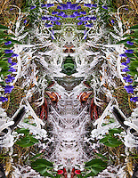 Inner Space Series 7