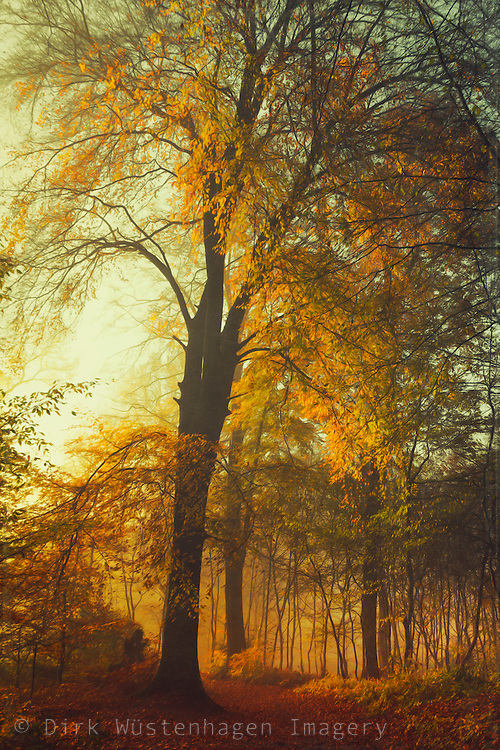 Golden leaves on a fall morning - texturized photograph