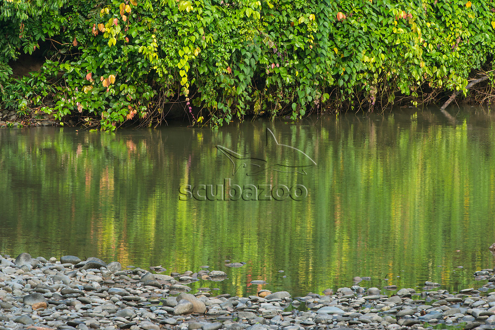 The reflection of riverside vegetation on the surface of a river, with rocks in the foreground, Danum Valley, Sabah, Malaysia.
