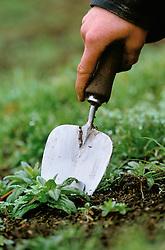 Hand weeding using a trowel
