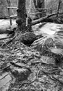 Jumbled tree roots and a rustic log bridge across a rushing river in the forest of Dartmoor England UK 2004