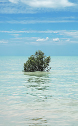 A lone mangrove is visible as the tide rises on the shores of Crab Creek in Roebuck Bay, south of Broome.