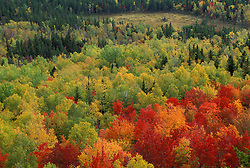 Near Russell Pond, Baxter SP, ME. Blazing fall colors in Baxter's Wassataquoik Valley. Northern Hardwood Forest.