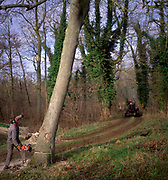 A01XD6 Sequence of nine Man cutting down an ash tree in English woodland