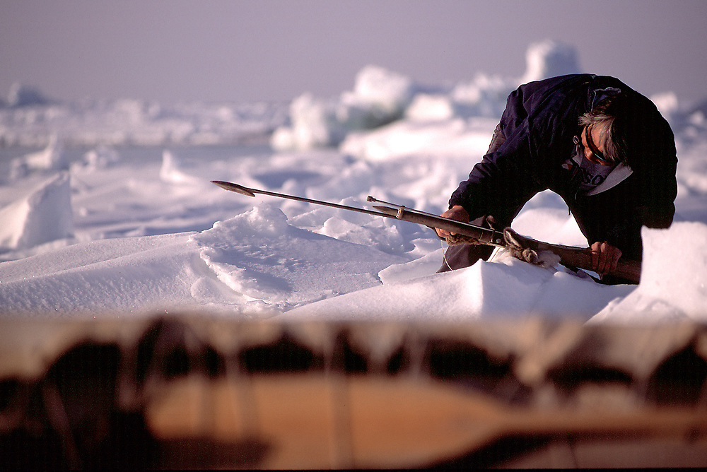 Native whaling captain checking his harpoon at his camp on the frozen Chukchi Sea, Barrow, Alaska
