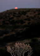 A super moon rises as seen from Redington Road, Redington Pass, Santa Catalina Mountains, Sonoran Desert, Tucson, Arizona, USA.