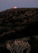A super moon rises as seen from Redington Road, Redington Pass, Santa Catalina Mountains, Sonoran Desert, Tucson, Arizona, USA.