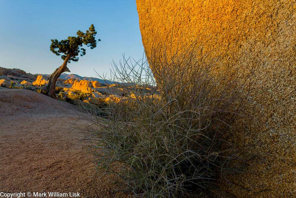 In the highest reaches of Joshua Tree National Park is the  Fabulous Jumbo Rock area.