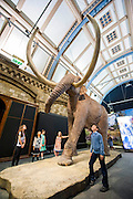 Mammoths: Ice Age Giants at the Natural History Museum (opens 23 May 2014)<br /> It includes huge fossils and life-size models of mammoths and their relatives tower above you and meet Lyuba, the world&rsquo;s most complete mammoth, as she takes centre stage in the exhibition for her first appearance in western Europe. She is the star of the show, a baby woolly mammoth discovered in Russia&rsquo;s Yamal Peninsula of Siberia in May 2007. She died around 42,000 years ago at just one month old. Her body was buried in wet clay and mud which then froze, preserving it until she was found by reindeer herder Yuri Khudi and his sons, as they were searching for wood along the frozen Yuribei River thousands of years later. The exhibition also includes some of the best-known species, from the infamous woolly mammoth and the spiral-tusked Columbian mammoth to their island-dwelling relative the dwarf mammoth. South Kensington, London.