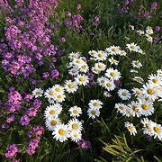A wide-angle of flowers in North Carolina.