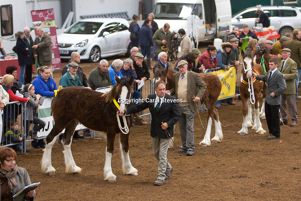 North West and Wales Shire Foal Society Show 2012<br /> Mr C Malkin's Lockley Kayla   f 04/03/12<br /> Sire   Milnerfield Sir William   Dam  Style Miss Fashion<br /> Winner  Filly Foal Class<br /> Champion Foal