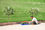 Israel, Haifa, Mount Carmel, the gardens around the Bahai Shrine of the Bab. gardener works in the garden