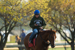 Horses were on the track for workouts Tuesday, April 30, 2013 at Churchill Downs in Louisville. Photo by Jonathan Palmer