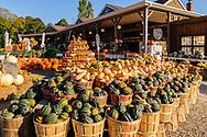 Squash, Bay View Farms and Market,  Aquebogue, NY