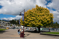 People sitting on benches in front of a yellow tree near the shore of Lake Wakatipu, Queenstown, Otago District, South Island, New Zealand