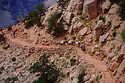Pack mules head up the South Kaibab Trail after an overnight camping trip at the bottom of the Grand Canyon.