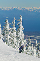A lone skier carves turns in fresh powder on Linton's Loop on Mount Washington with Georgia Strait and the Coast Range Mountains in the distance. Mount Washington, Comox Valley, Vancouver Island, British Columbia, Canada.