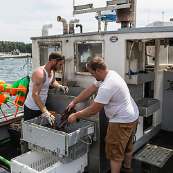 "Ryan Schultz (left) helps captain Richard Curtis unload lobsters from his boat, ""Margaritaville"" at the Friendship Lobster Co-op in Friendship, Maine."