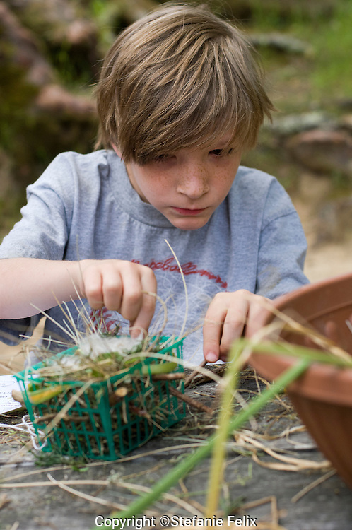 Walnut Creek, California: May 13, 2009. 3rd grade boy make his own birds nest on a Mt. Diablo outdoor education field trip.