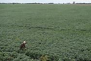 Als die Bienen verschwanden, waren Hugo Aguirre und die anderen Imker erst RATLOS. Die Spur führte schließlich in die Soja-Felder.