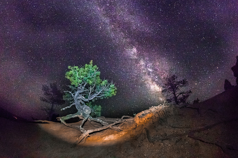 A light shines on a lone pinion pine as the milky way core rises above Bryce Canyon, Utah at night.