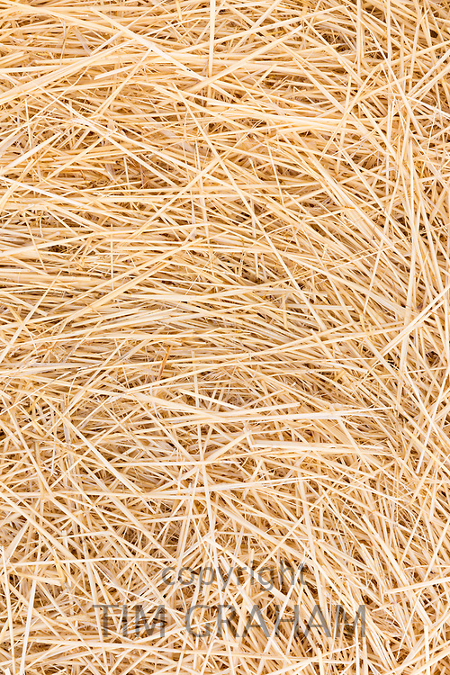 Barley straw in a field in Segovia, Spain