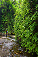 Hiker in Fern Canyon, Prairie Creek Redwoods State Park, California