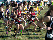 Mira Carey-Hatch '14 (#495), Amanda Solch '14 (#502), and Lindsay Cullen '13 (#496) race during the NCAA Championship in Terre Haute, Ind. on November 17, 2012.