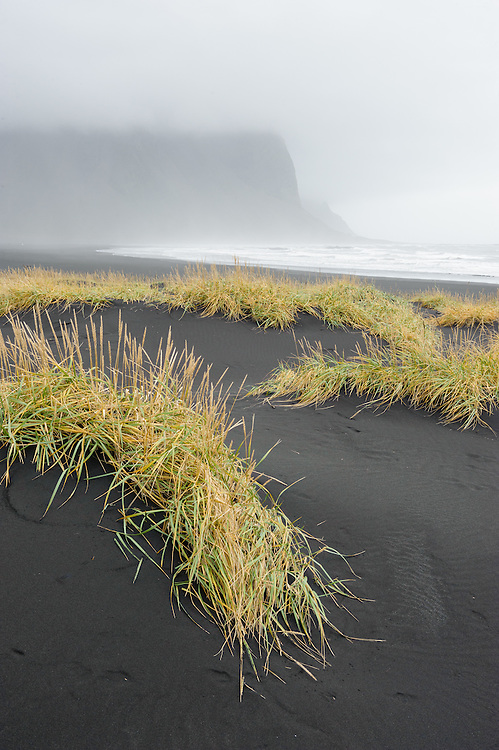 Lyme grass and dunes, Stokksnes, Iceland