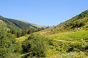 Austria, Tyrol, Rural Scene