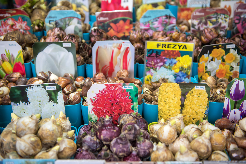 Various bulbs on display for sale in plastic containers at outdoor marketplace, Istanbul, Turkey.
