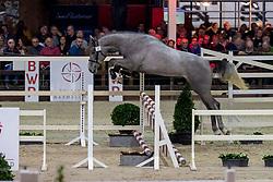 047, Ramos JW Van't Meulenhof TN<br /> BWP Hengstenkeuring -  Lier 2020<br /> © Hippo Foto - Dirk Caremans<br />  17/01/2020