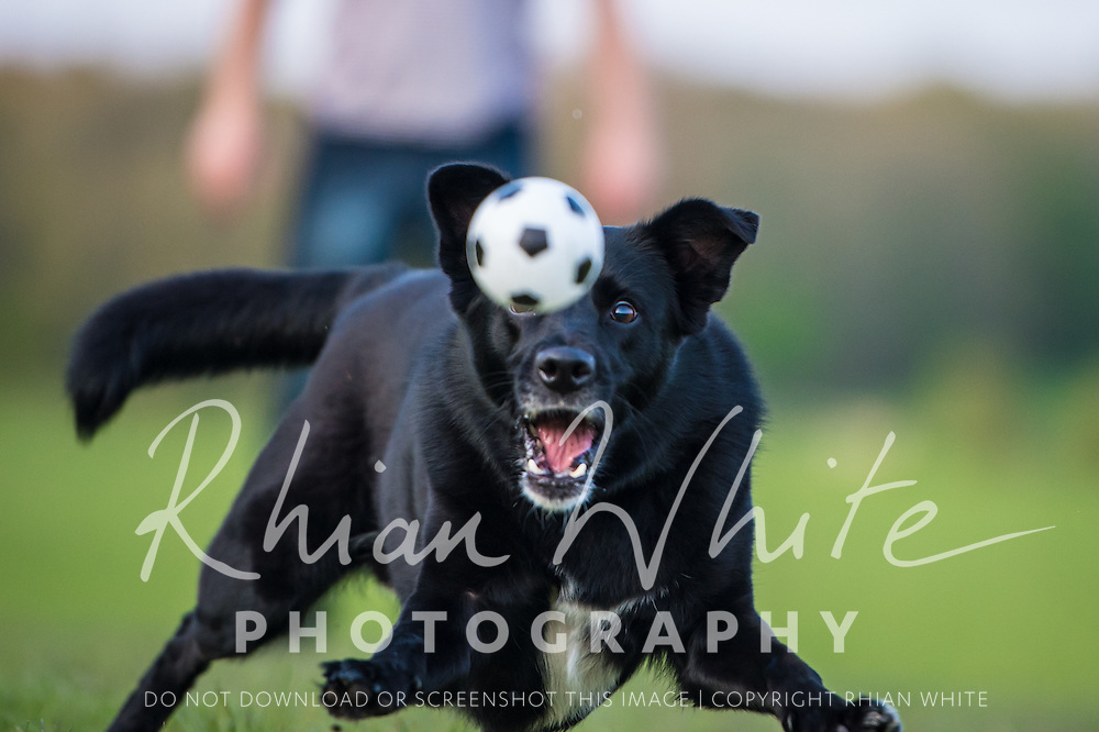 Images of Bailey Boy Boo at Stanmer Park, Brighton.