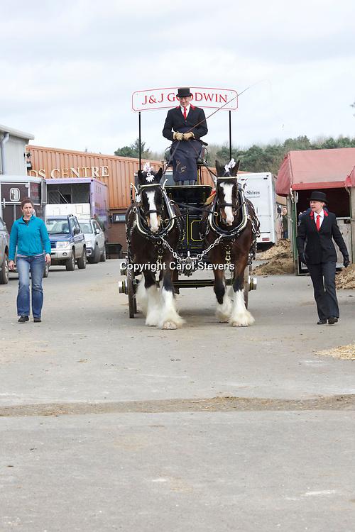 Shire Horse Society Spring Show 2017 Around the Showground<br /> John Goodwin, Emma Scotney, Oscar and Dizzy B