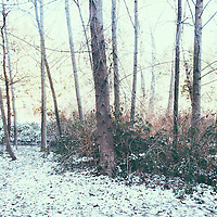 A sparse forest covered in a little blanket of snow.